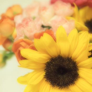 テスタマッタの花束.jpg